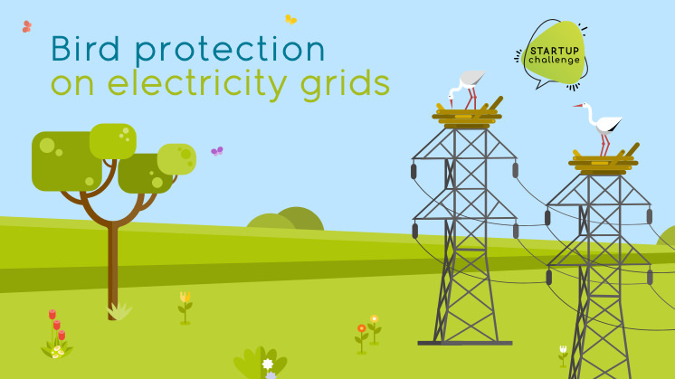 BIRD PROTECTION ON ELECTRICITY GRIDS – APPLY